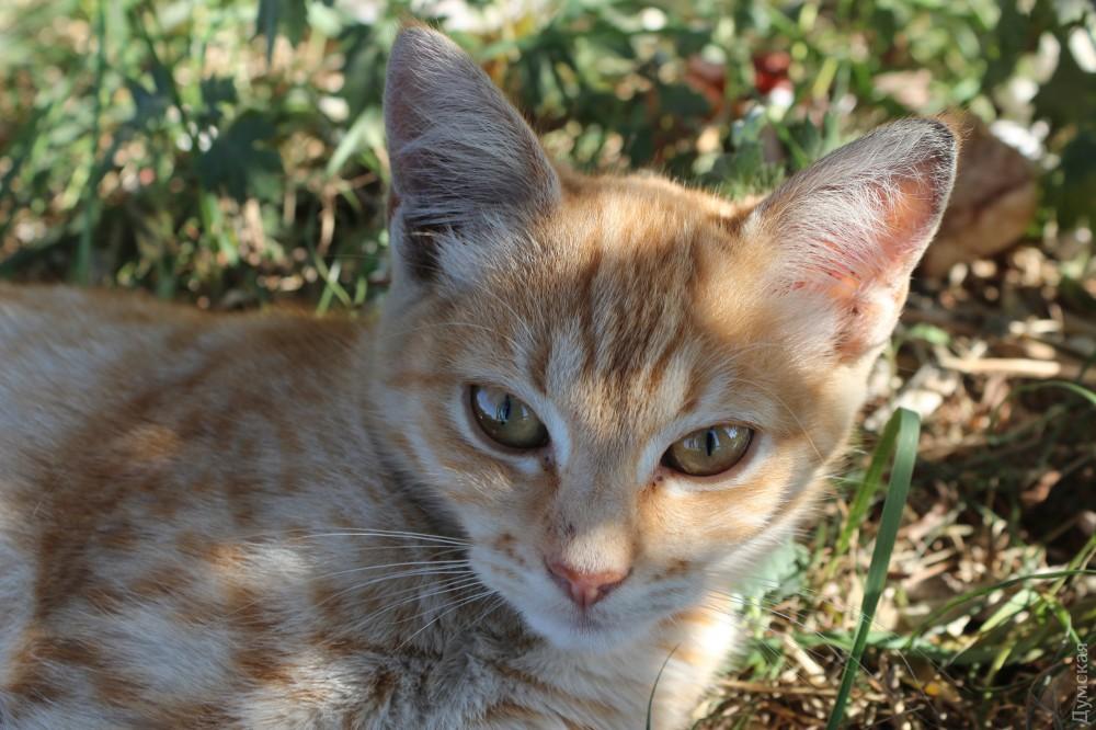 Кошачье население не любит фотографироваться