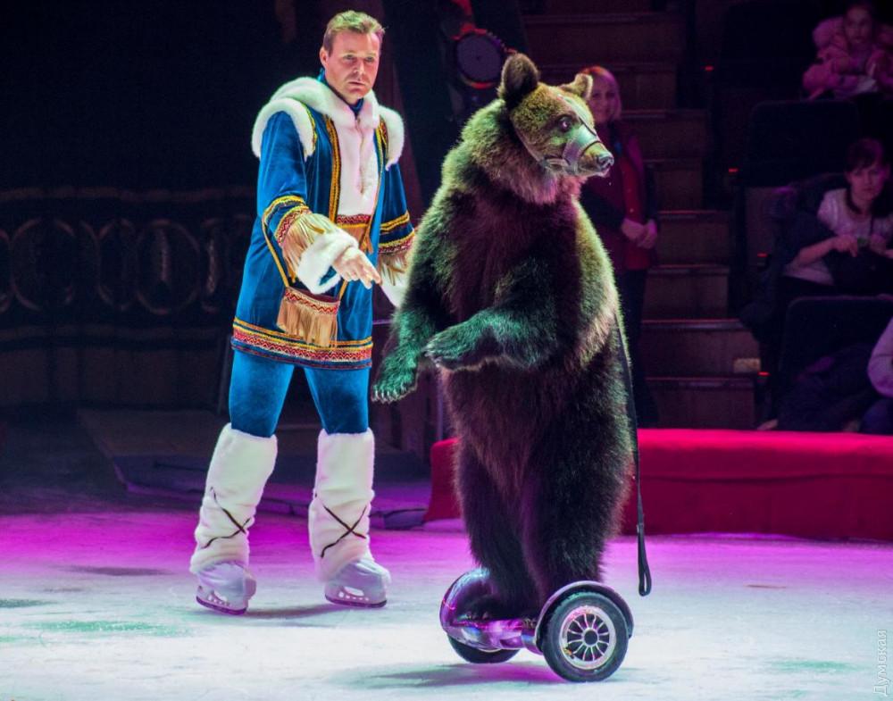 Госэкоинспекция запретила использовать медведей в Одесском цирке