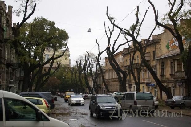 В Киеве дерево упало на автомобиль с мамой и ребенком, который от полученных травм погиб - Цензор.НЕТ 9772