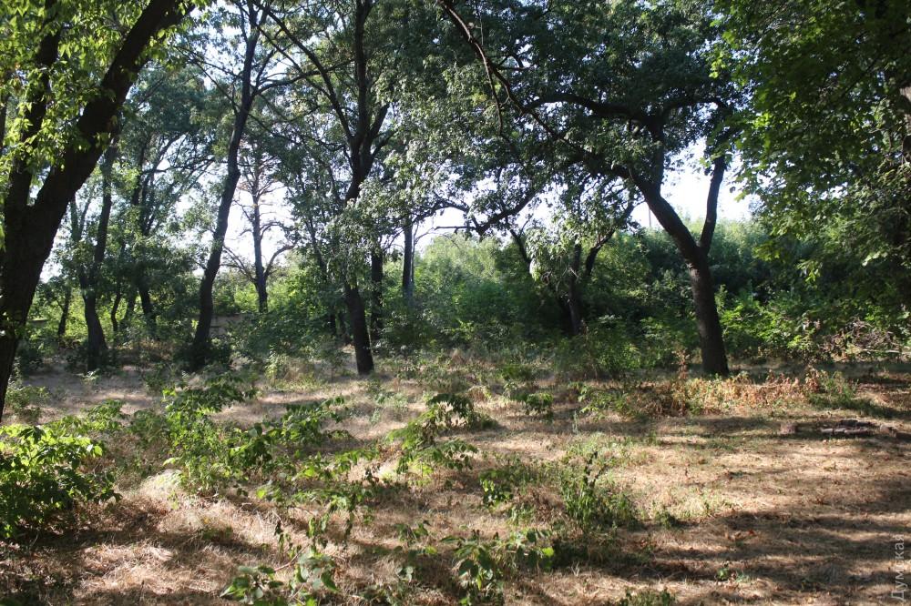 В некоторых местах парк, пусть и неухоженный, выглядит очень органично и красиво