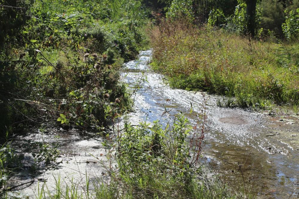 Дурно пахнущий ручеек течет по асфальту заброшенной восточной части санатория со Шкодовой горы и из Усатова. Судя по всему, это отходы жизнедеятельности тамошнего населения