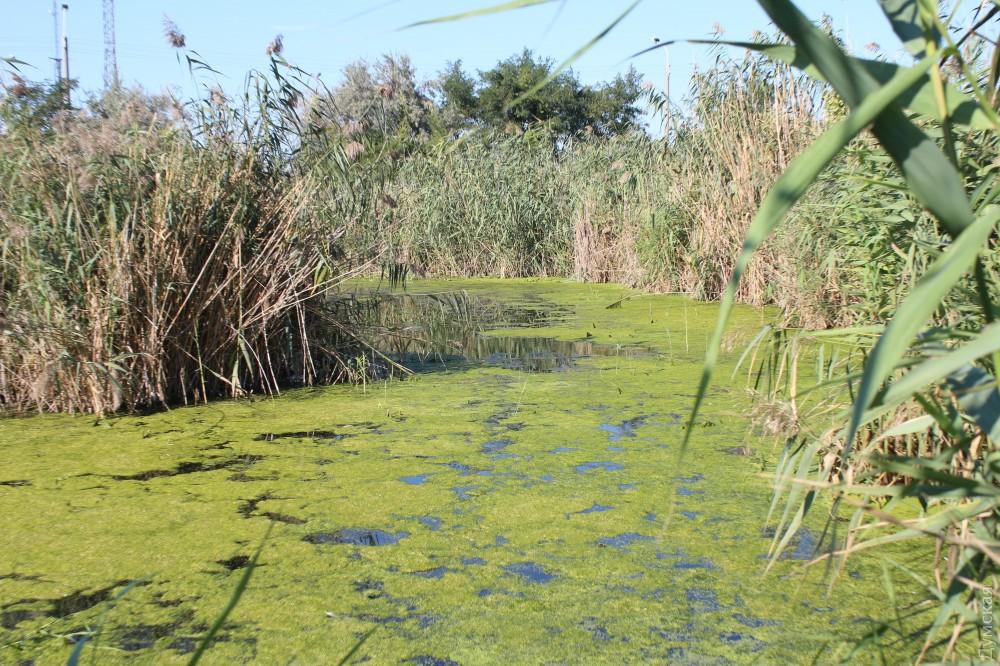 Великолепный старинный пруд был уничтожен при строительстве окружной дороги, большая часть его была засыпана