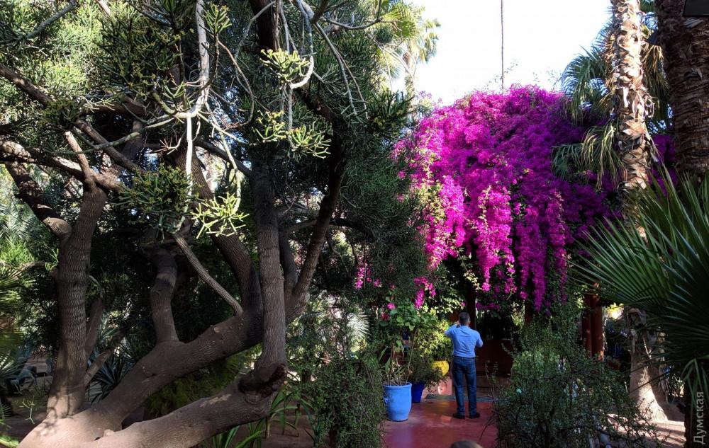 В сад Мажореля, который в сто раз меньше нашего парка Шевченко, ежегодно приезжает 650 тысяч туристов