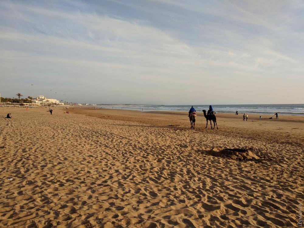 Вода в Атлантике была холодная, всего +20, поэтому на пляже немноголюдно. И немного верблюдно.