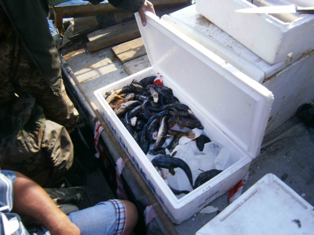 Рыбаки, заплывшие «за буйки», расплатились 6-ю протоколами и штрафом, фото-3