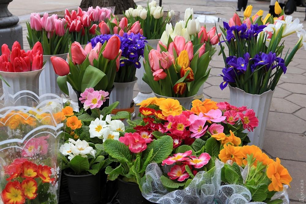 Цветы одесса