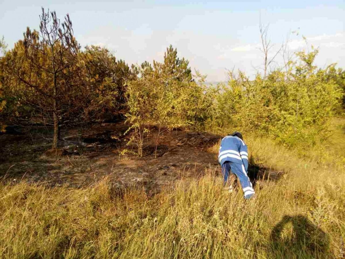 ВОдесской области горело 13 галеса— ГСЧС