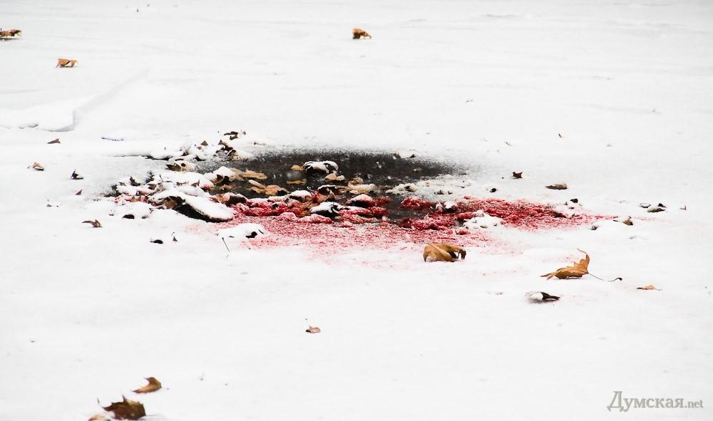 Мощность взрыва в Одессе - килограмм в тротиловом эквиваленте. Судя по повреждениям, неизвестный нес взрывчатку в руках, - МВД - Цензор.НЕТ 5875