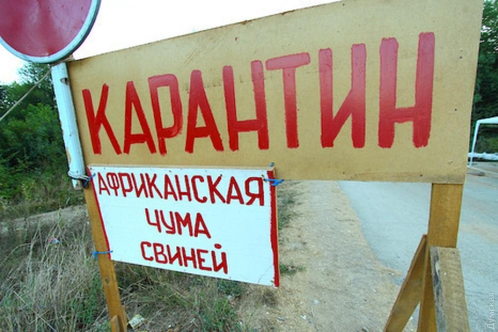 Под Одессой зафиксировали вспышку африканской чумы свиней
