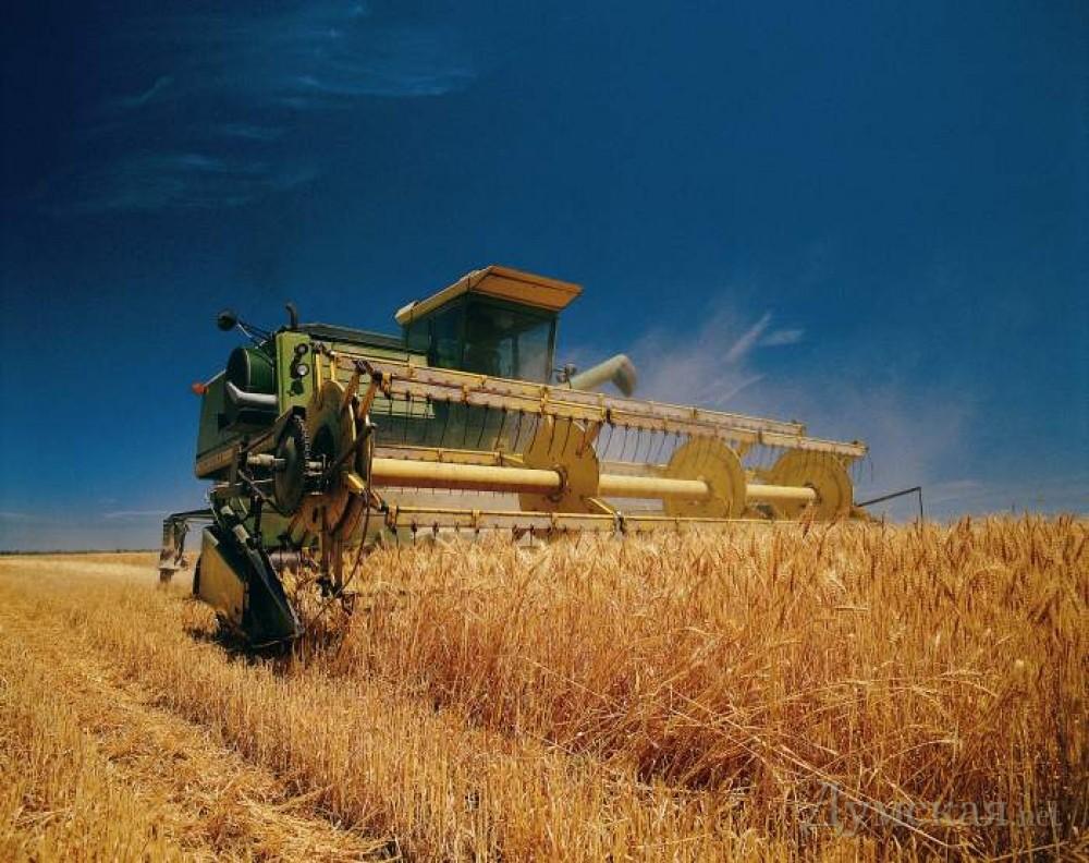 Украина за год собрала рекордные 66 миллионов тонн зерновых