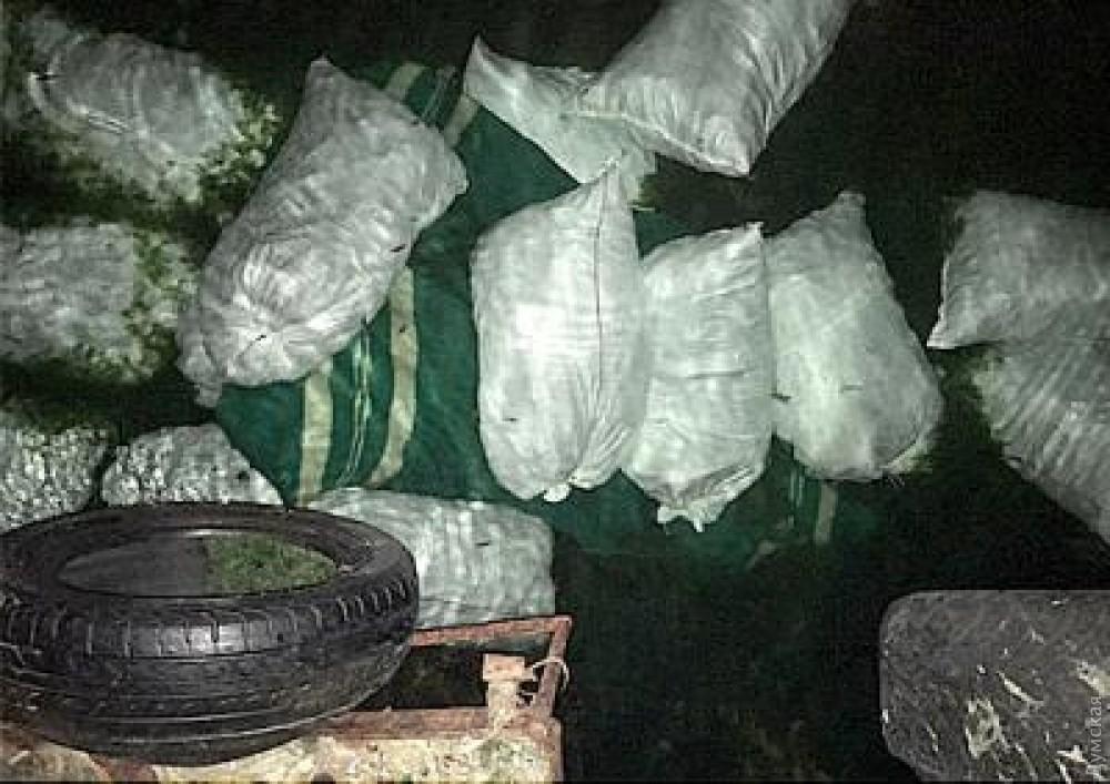 Наберегу Черного моря таможенники обнаружили неменее 700 килограммов мидий ирапанов