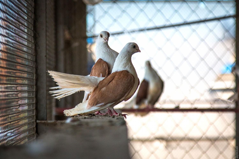 Видео секс на голубятне