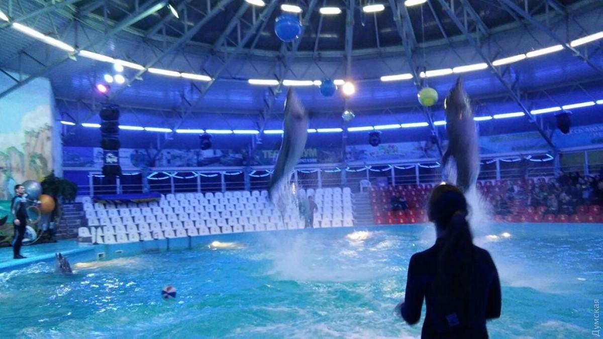 Дельфинарий «Немо» вКиеве арестован