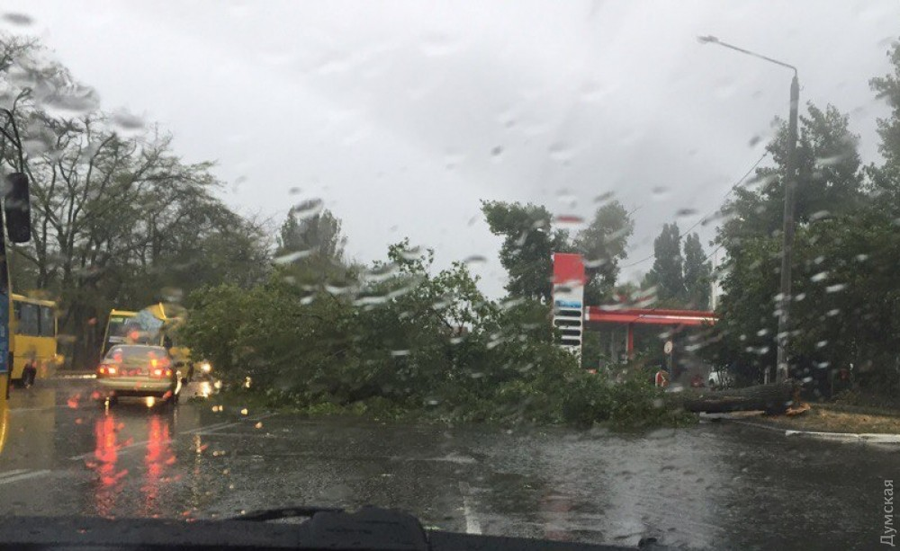 Непогода вОдессе: штормовой ветер повалил неменее 60 деревьев