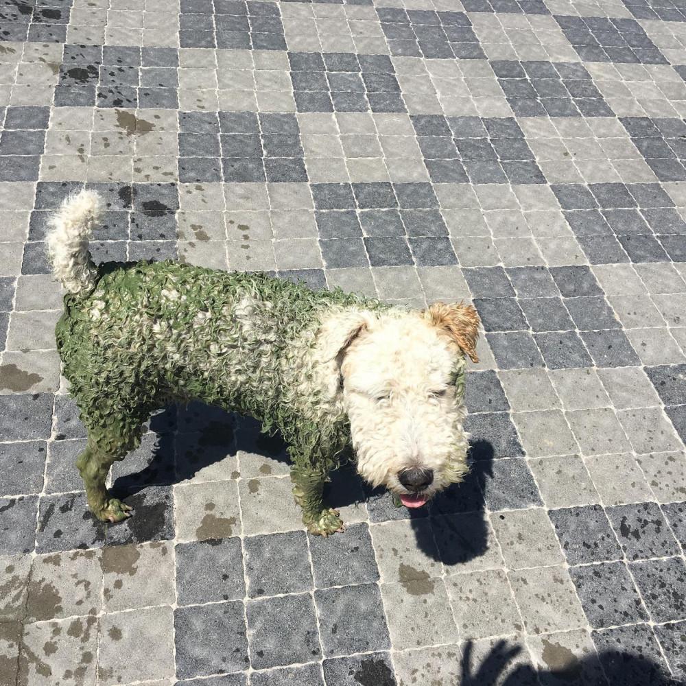 Собака после купания на одесском пляже