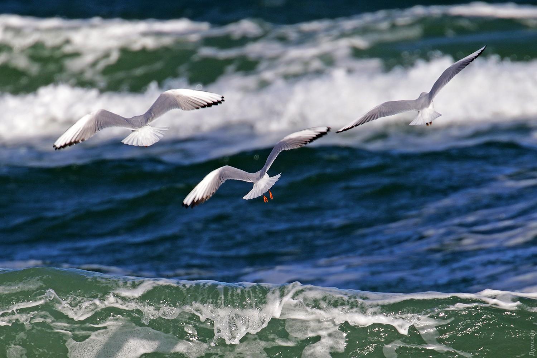 известно, придет чайки над морем картинки фотографий