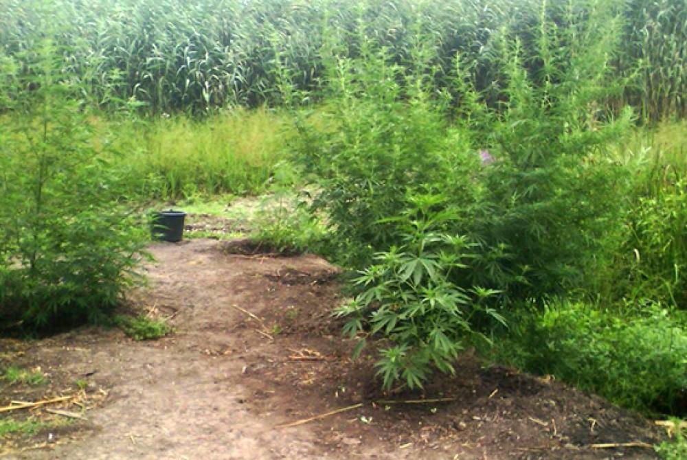 Конопля в одесской области марихуана легально