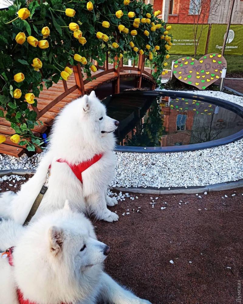 В «Парке Совиньон» провели праздник ко Дню всех влюбленных, фото-2