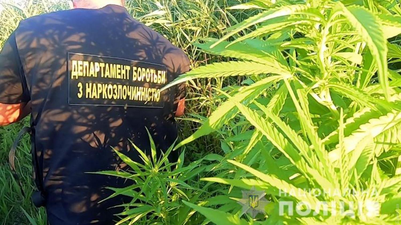 Полиция канады обнаружили плантацию марихуаны масла при курении конопли