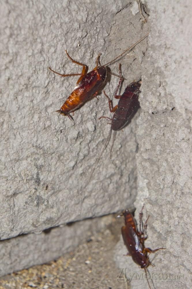 как многие тараканы в крыму фото меня самого очень